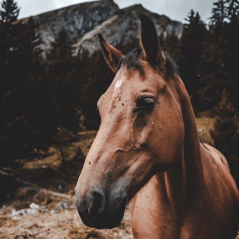 preparat dla koni na ukąszenia
