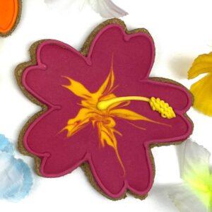 Candy Horse Aloha hibiskus